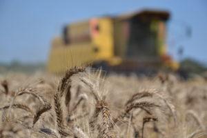 Moissonneuse batteuse blé