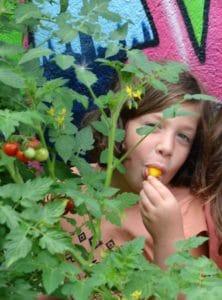 Jeune fille dans les plants de tomates